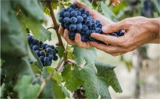 offensive-secteur-activite-viticulture